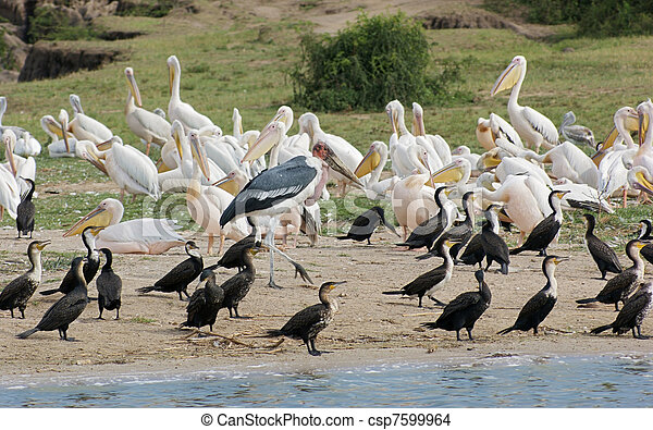 birds at the Queen Elizabeth National Park in Uganda - csp7599964