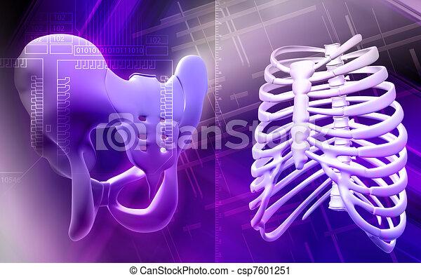 Pelvic girdle and rib cage - csp7601251