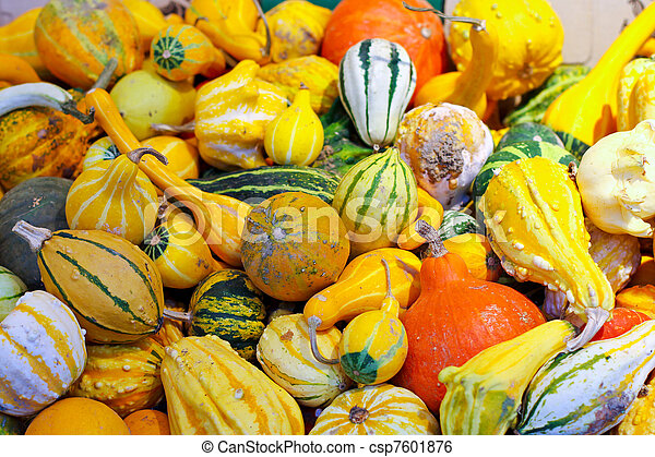 Pumpkin assortment - csp7601876