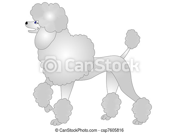 nice poodle insulated on white - csp7605816