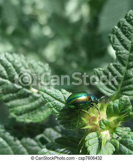 iridescent flower chafer - csp7606432