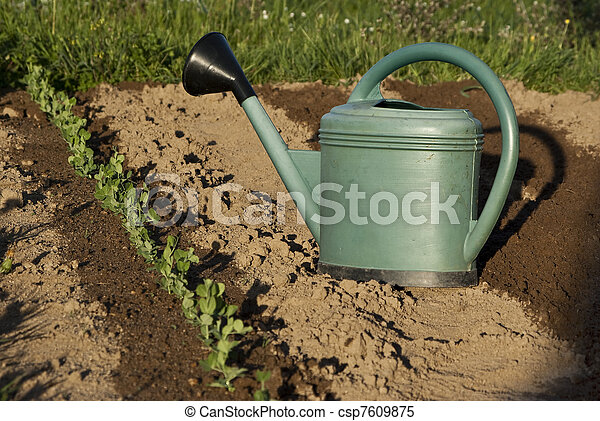 Young beans with a watering can - csp7609875