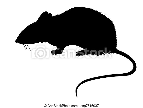 silhouette of the rat on white back - csp7616037