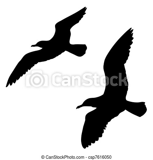 silhouette of the sea gull on white - csp7616050