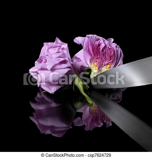 halved rose and knife - csp7624729