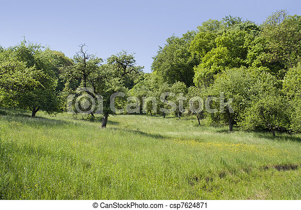 idyllic spring scenery - csp7624871