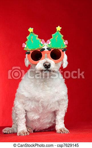 stock bilder von weihnachten hund tragen brille a. Black Bedroom Furniture Sets. Home Design Ideas