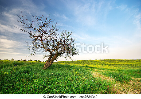 Lonely tree on sundown. - csp7634349