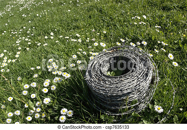 barbwire and daisy flowers on a meadow - csp7635133