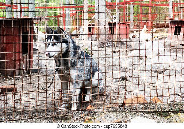sad and tearful dog in captivity - csp7635848