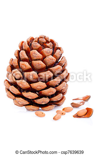 Ripened cone with pine nuts on white