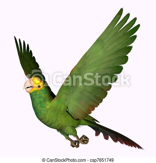 Double Yellow Amazon Parrot - csp7651749