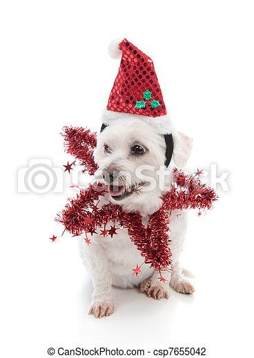 Festive pooch - csp7655042