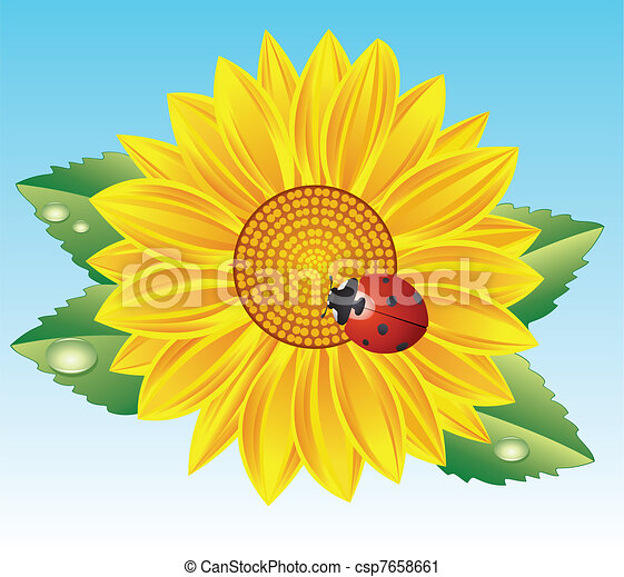 sunflower and red ladybird - csp7658661