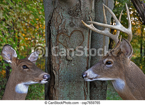 deer in woods - csp7659765