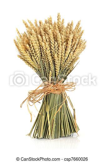 Wheat - csp7660026