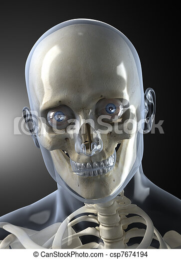 Drawing of Male Human Head X-ray Front view - Transparent ... X Ray Human Skull