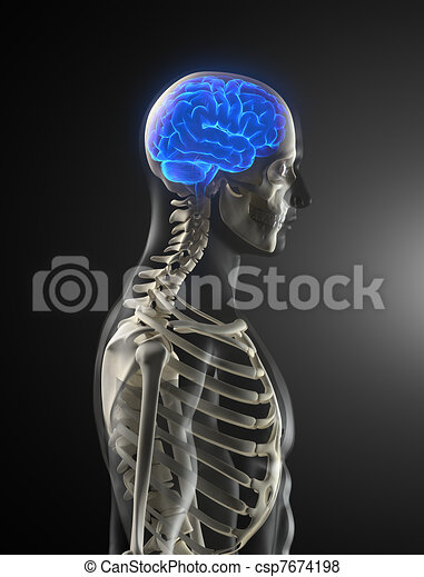 Human Brain Medical Scan - csp7674198