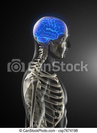 Human Brain Medical Scan - csp7674198