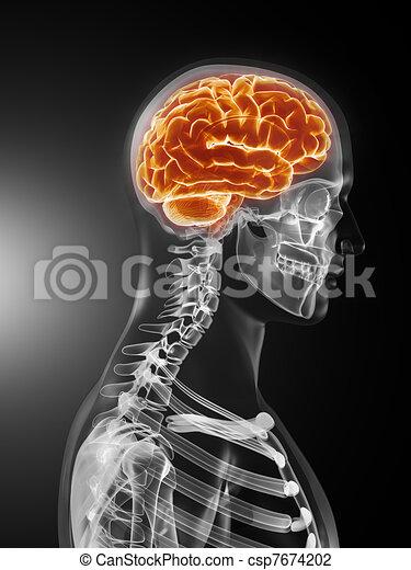 Human Brain Medical Scan - csp7674202