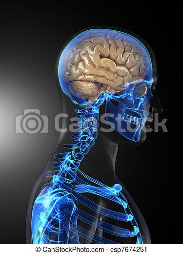 Human Brain Medical Scan - csp7674251