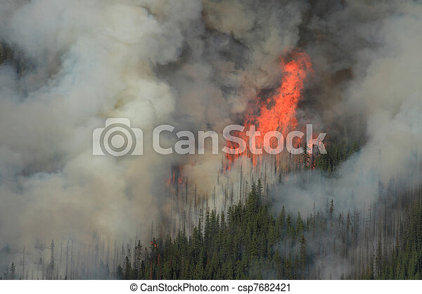 Forest Fire in the Rocky Mountains 07 - csp7682421