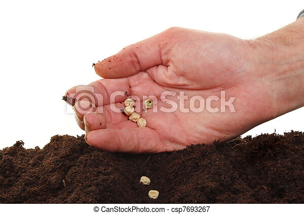 Hand sowing seeds - csp7693267