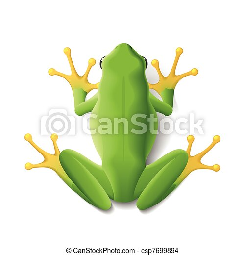 Green frog - csp7699894