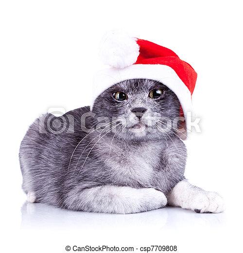 suspicious little santa cat - csp7709808