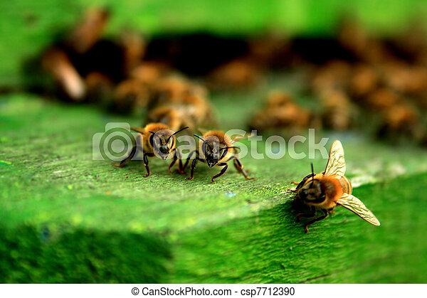 Working bee macro shot - csp7712390