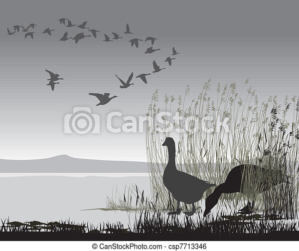 Wild geese, delayed migrating - csp7713346