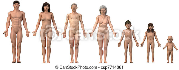 Whole family in anatomical position - any bust also as single image available - csp7714861