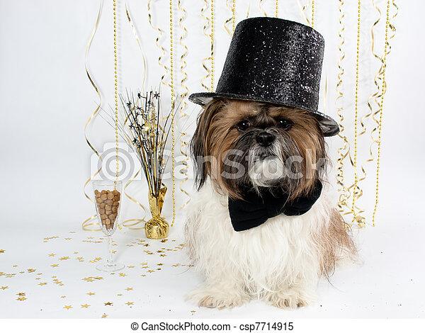 A Shih Tzu in a Top Hat Celebrates New Year's Eve - csp7714915