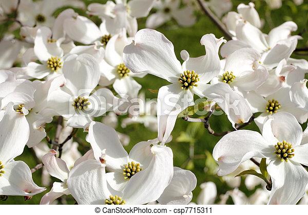 Beautiful Nature - csp7715311