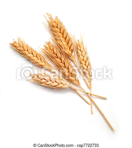 Wheat ears isolated - csp7722733