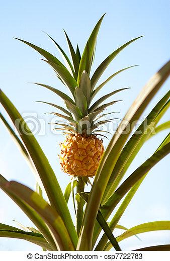 stock fotos von ananas pflanze ananas auf der. Black Bedroom Furniture Sets. Home Design Ideas