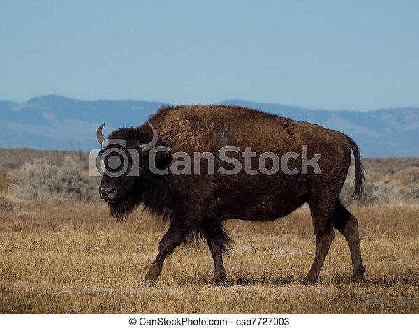 Buffalo Ranch - csp7727003