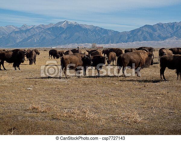 Buffalo Ranch - csp7727143