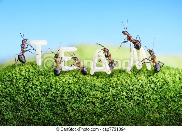 ants constructing word team - csp7731094