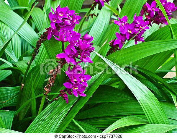 botanical Garden of Peradeniya, Kandy - csp7737026