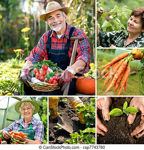 Harvesting - csp7743760