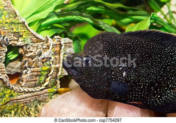 stock foto sch ne aquarium fische stock bilder bilder lizenzfreies foto stock fotos. Black Bedroom Furniture Sets. Home Design Ideas