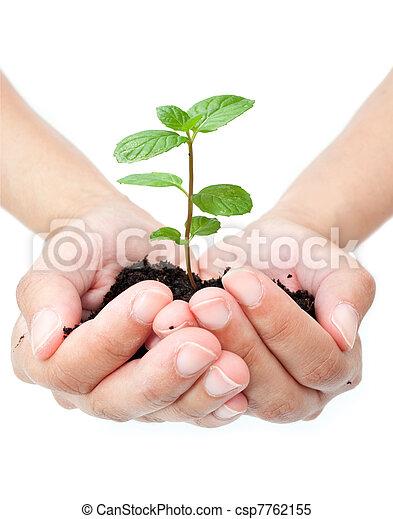 Plant in hands  - csp7762155