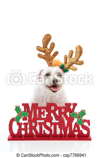 Pet with reindeer antlers and Merry Christmas message - csp7766941