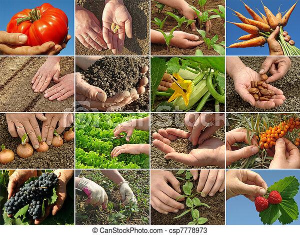 farming collage - csp7778973