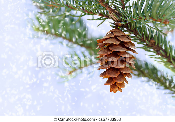 Pine cone with snow - csp7783953