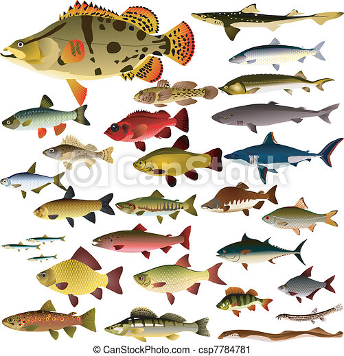 Vector collection of fish - csp7784781