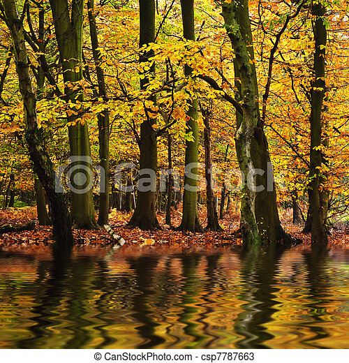 Stock Photos of Beautiful forest landscape with vibrant