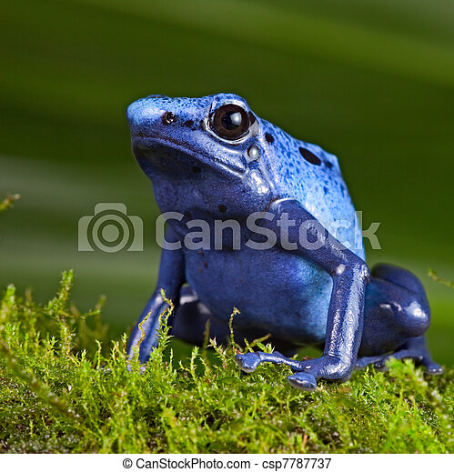 bilder von blaues gift frosch wurfpfeil blaues gift wurfpfeil csp7787737 suchen sie. Black Bedroom Furniture Sets. Home Design Ideas