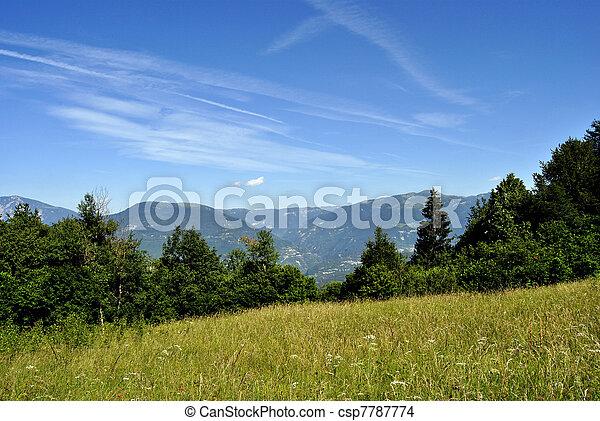 forest - csp7787774